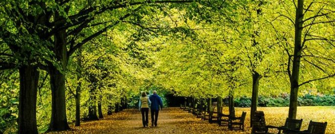 two people walking underneath a canopy of leafy tree branches