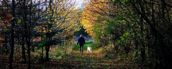person and dog walking in the woods