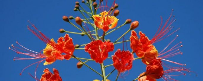 bright red and yellow flowers against a blue sky