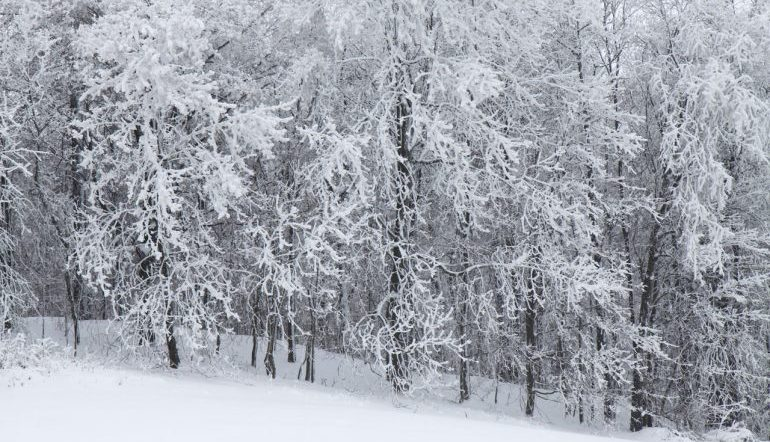 edge of a forest of white, snow-covered trees