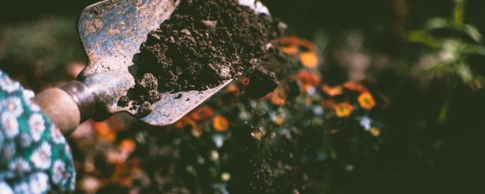 Image of a garden trowel scooping soil