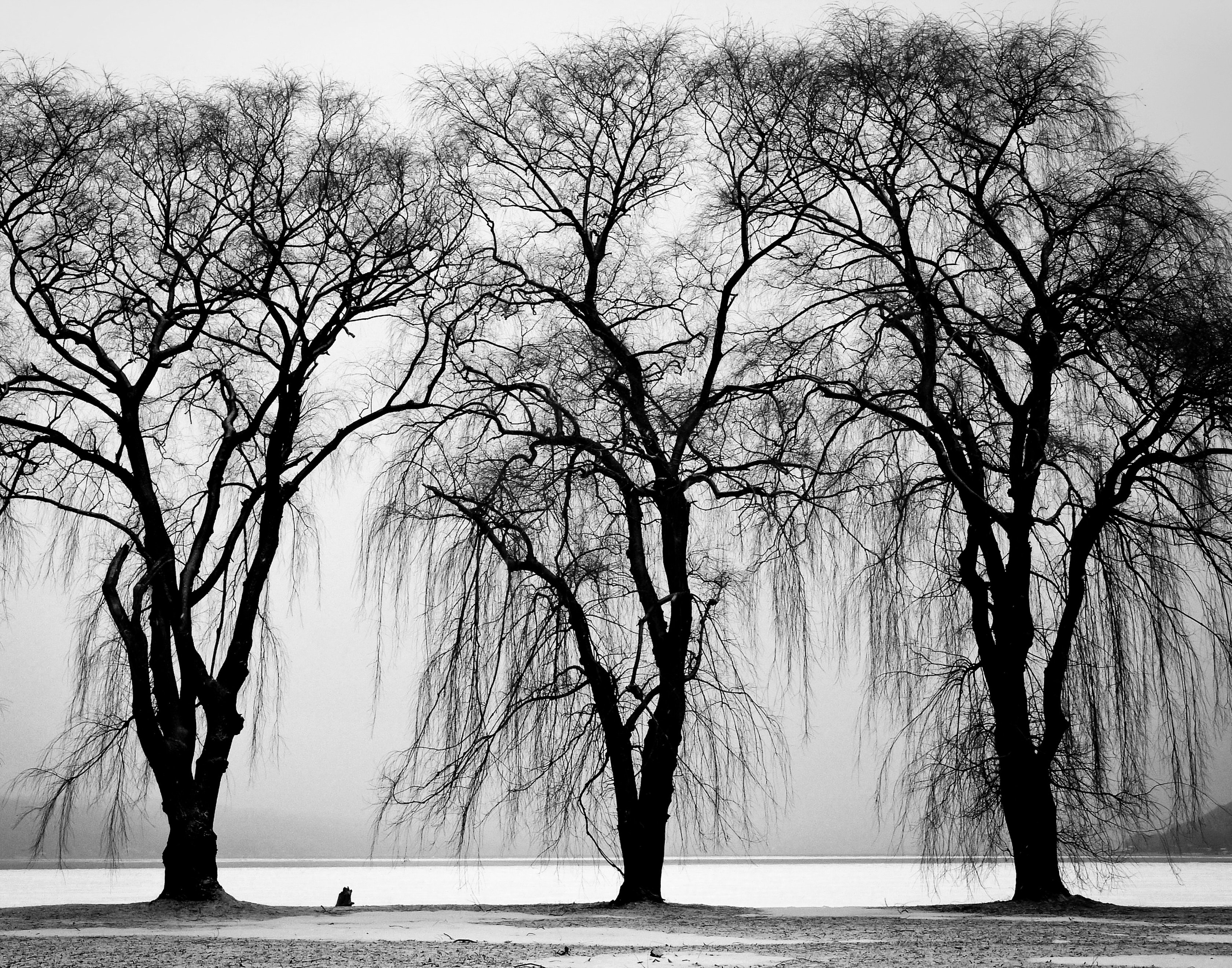 Black and white photograph of trees by a river
