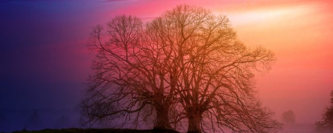 Two old trees standing bare on a hill with an orange, pink, and purple sunset behind them