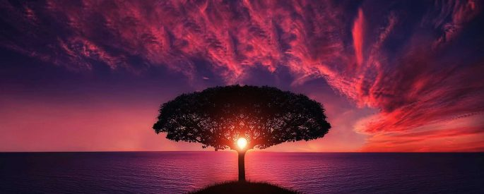 Image of a tree with the sun setting through it's branches, and a beautiful pink and purple sky