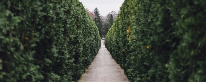 Green hedges line a secluded walkway on a grey day.