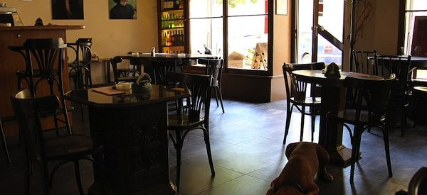 photo of a cafe interior with dark wood floors, a dog naps under a table