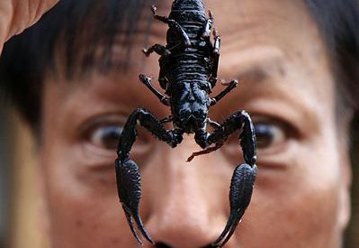 photo of a person holding a scorpion up the camera with a concerned expression on their face