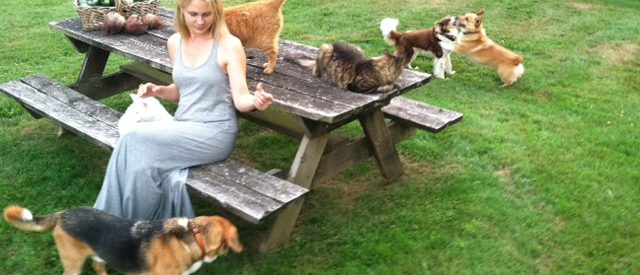 a woman sits on a bench in a grassy backyard with a multitude of cats, orange and tabby, surrounding her