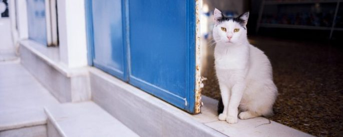 Cat in a doorway