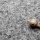 A snail moving across tile