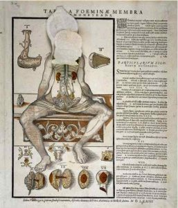 AnatomicalFugitiveSheet