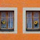 Two windows, each with a flower sticking out
