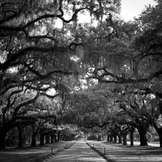 Avenue of Oaks, SC. 2013. Melanie Masson.