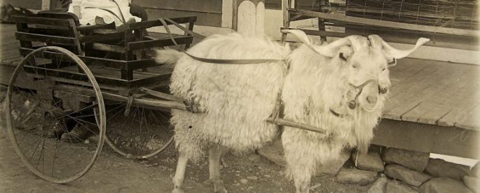 Baby on a goat cart ca. 1916