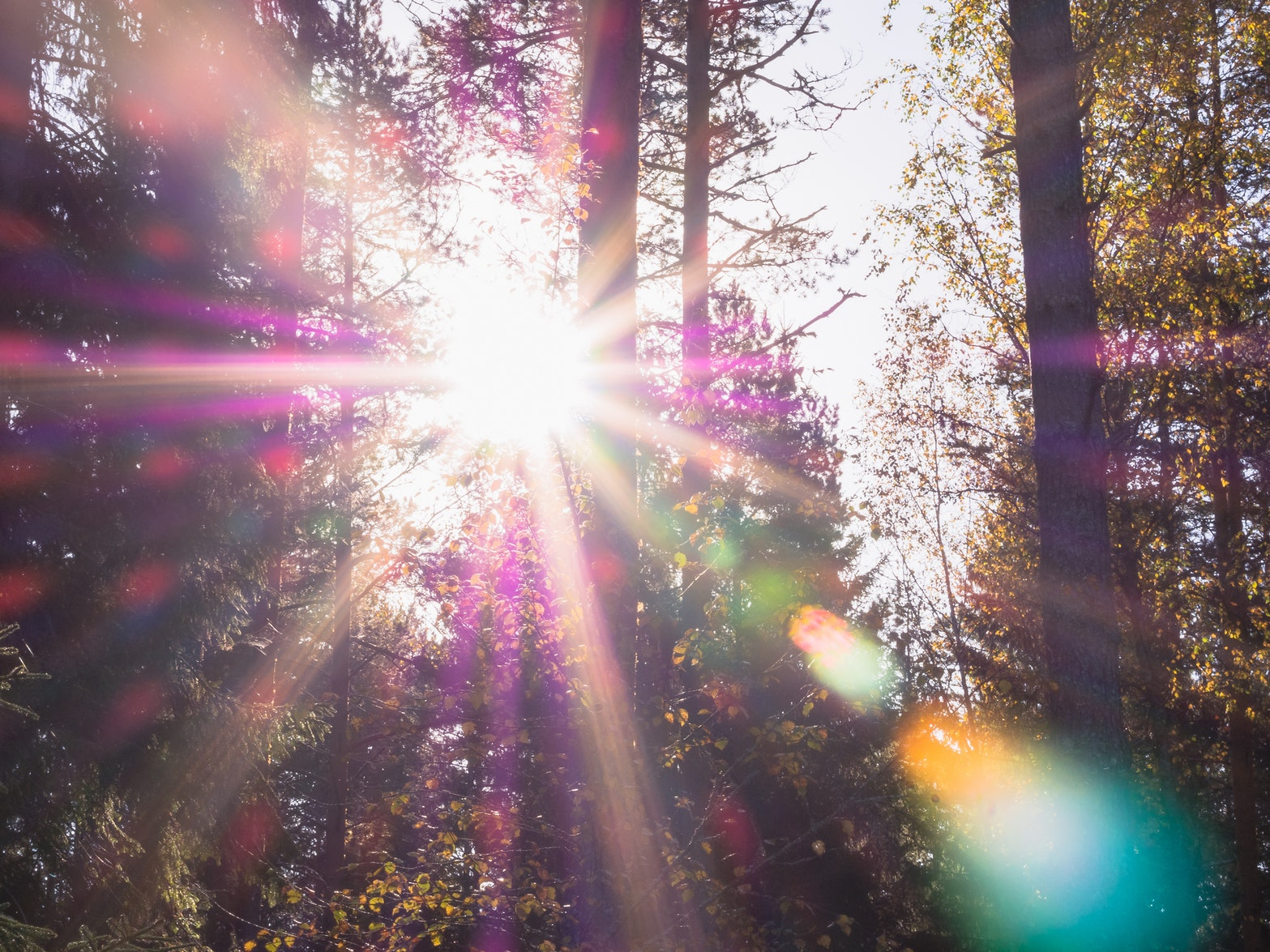 Lens flare in a purple forest.