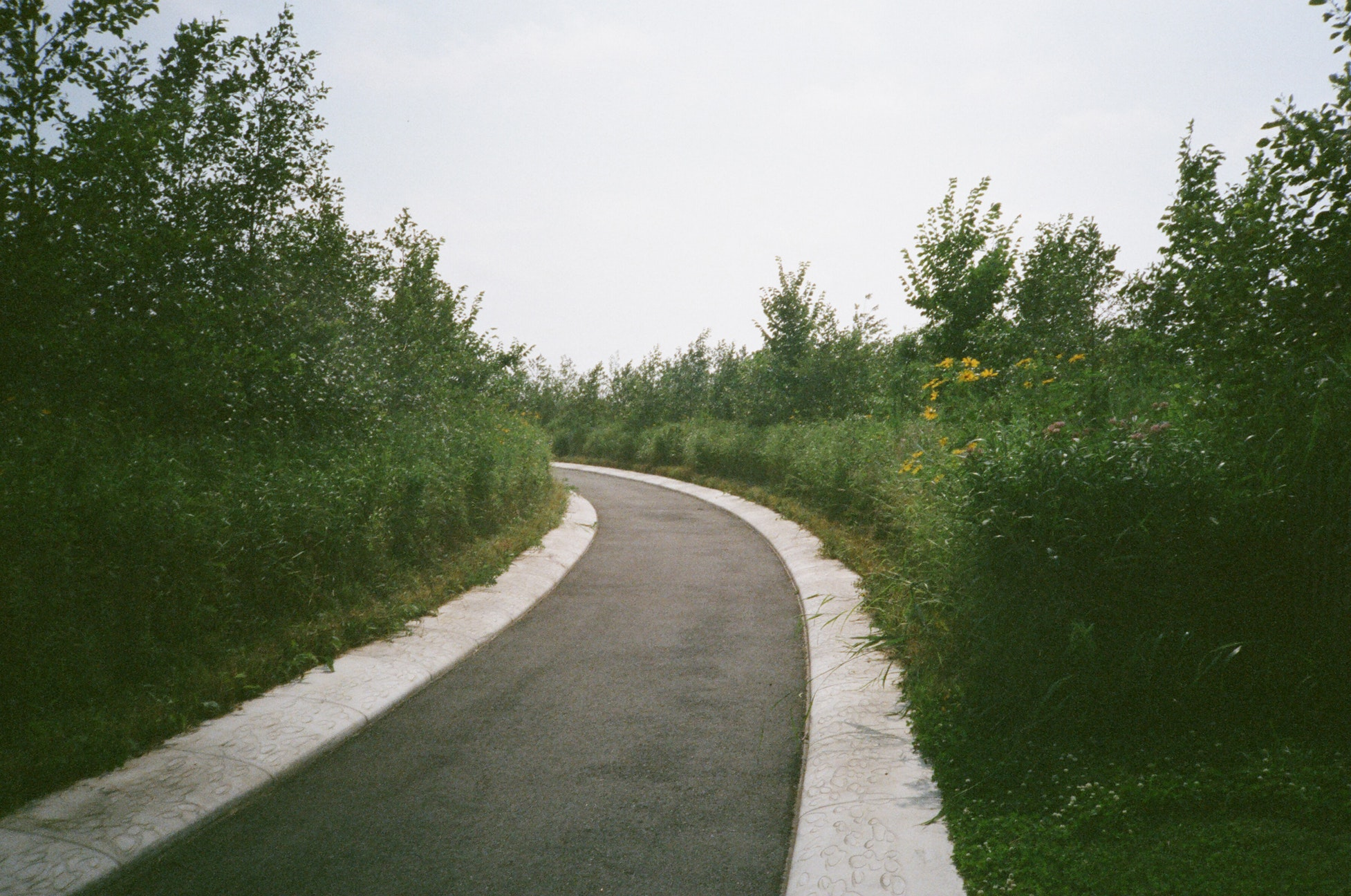 Picture of the end of a concrete path in the woods.