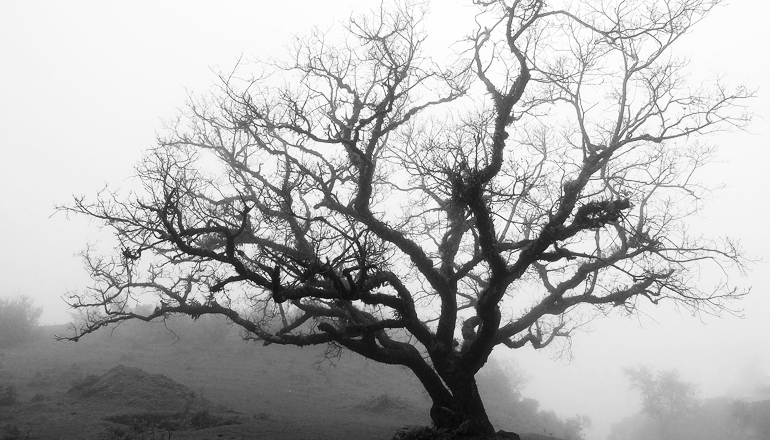 Black and white picture of a tree with no leaves in the middle of the fog.