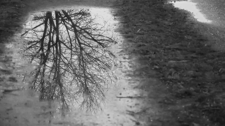 Black and white picture of a tree reflecting on a puddle on a dirt road