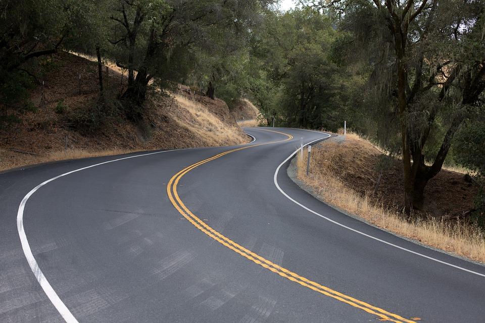 roadkill blog