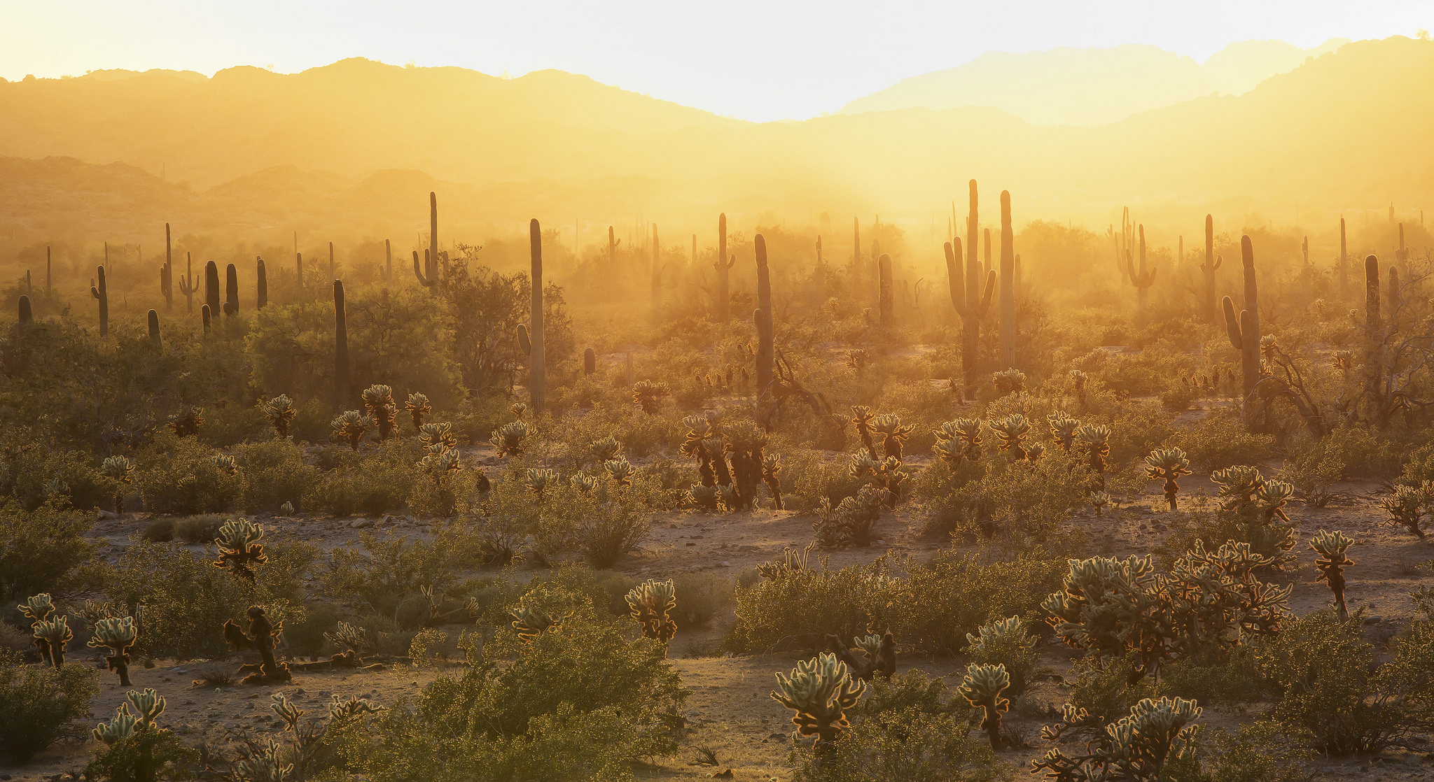 photo by Bob Wick, a photo of the desert at sunset