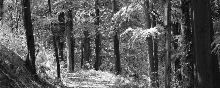 """Robert Frost's poem """"The Road Not Taken"""" has long been misinterpreted."""