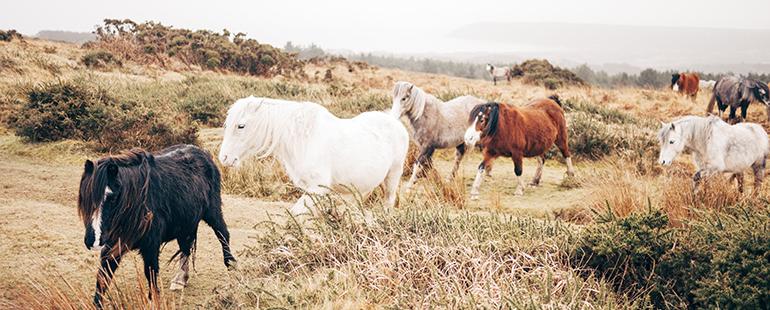 horses770
