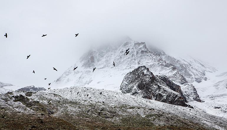 snowbirdsedited