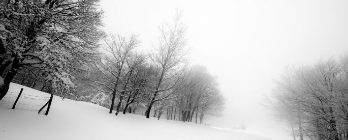 leafless trees in blizzard