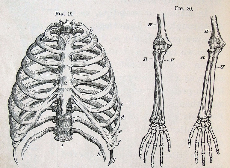 anatomy-illustration1