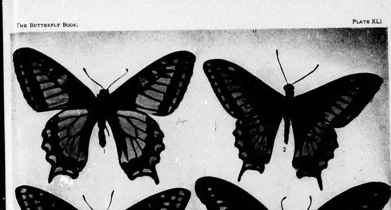 The_butterfly_book_(microform)_-_a_popular_guide_to_a_knowledge_of_the_butterflies_of_North_America_(1898)_(20429365158) (3)