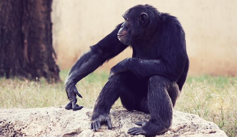 Monkey sitting on a rock.