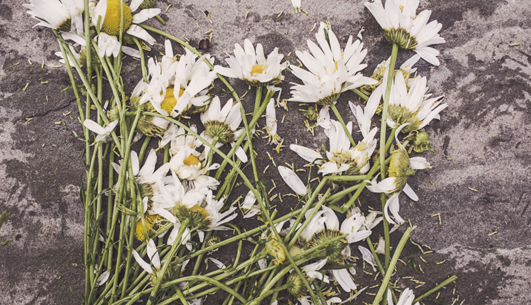 Crushed daisies on pavement.