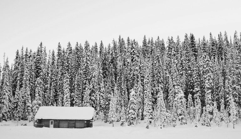 Small cabin in front of large trees covered in snow.