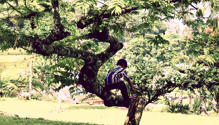 Boy climbing a tree.