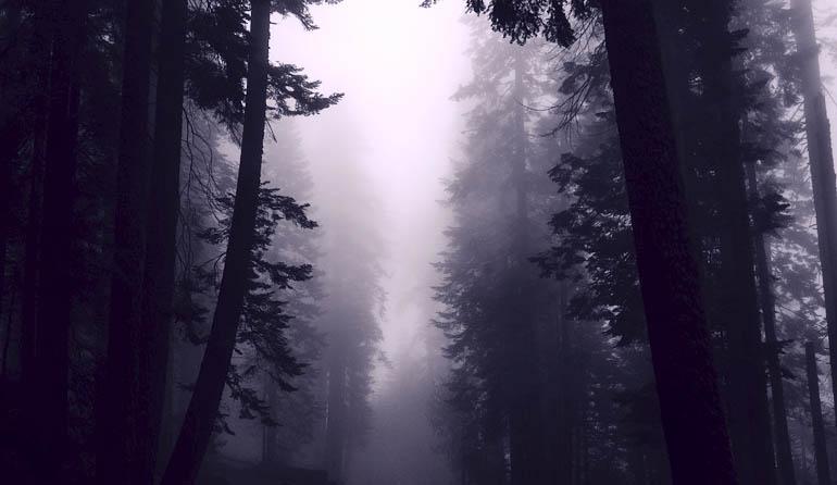 Dark foggy forest.