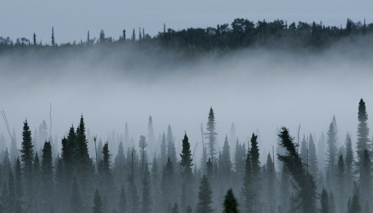 foggy or smoky forest