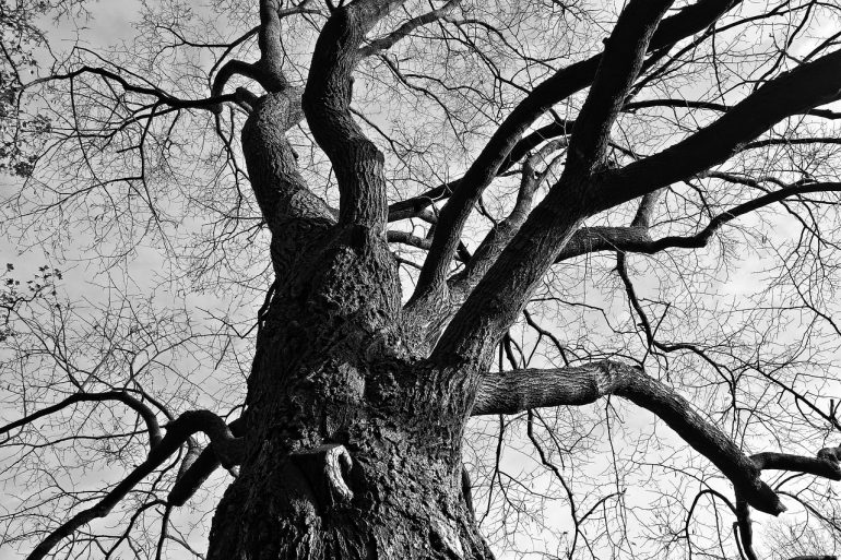 black and white image of tree