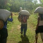 people holding large sacks on their shoulders walking on a grassy path