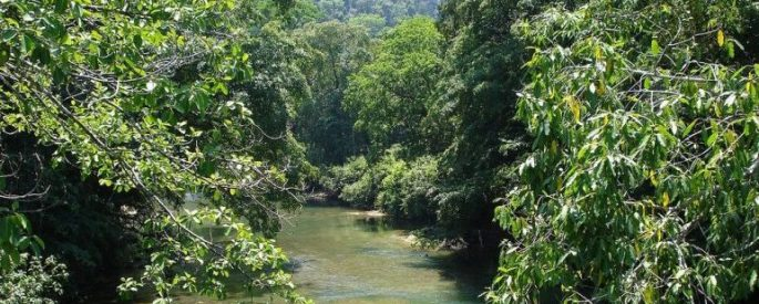river flanked densely by leafy trees