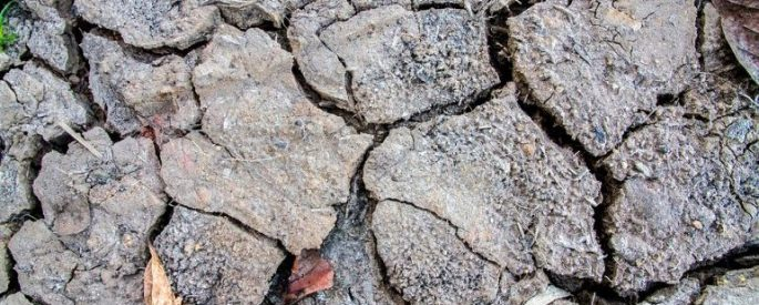 rifts in arid cracked soil