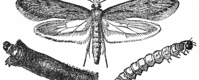 illustration of moth