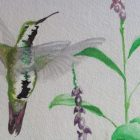 painting of a hummingbird in flight next to purple flowers