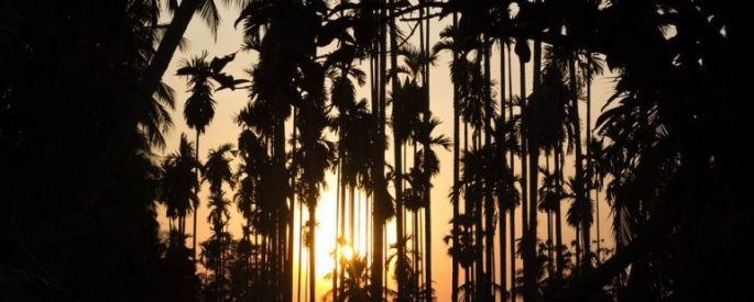 backlit photograph of sunset behind cluster of dark palm trees and other dark foliage closing in on the sides