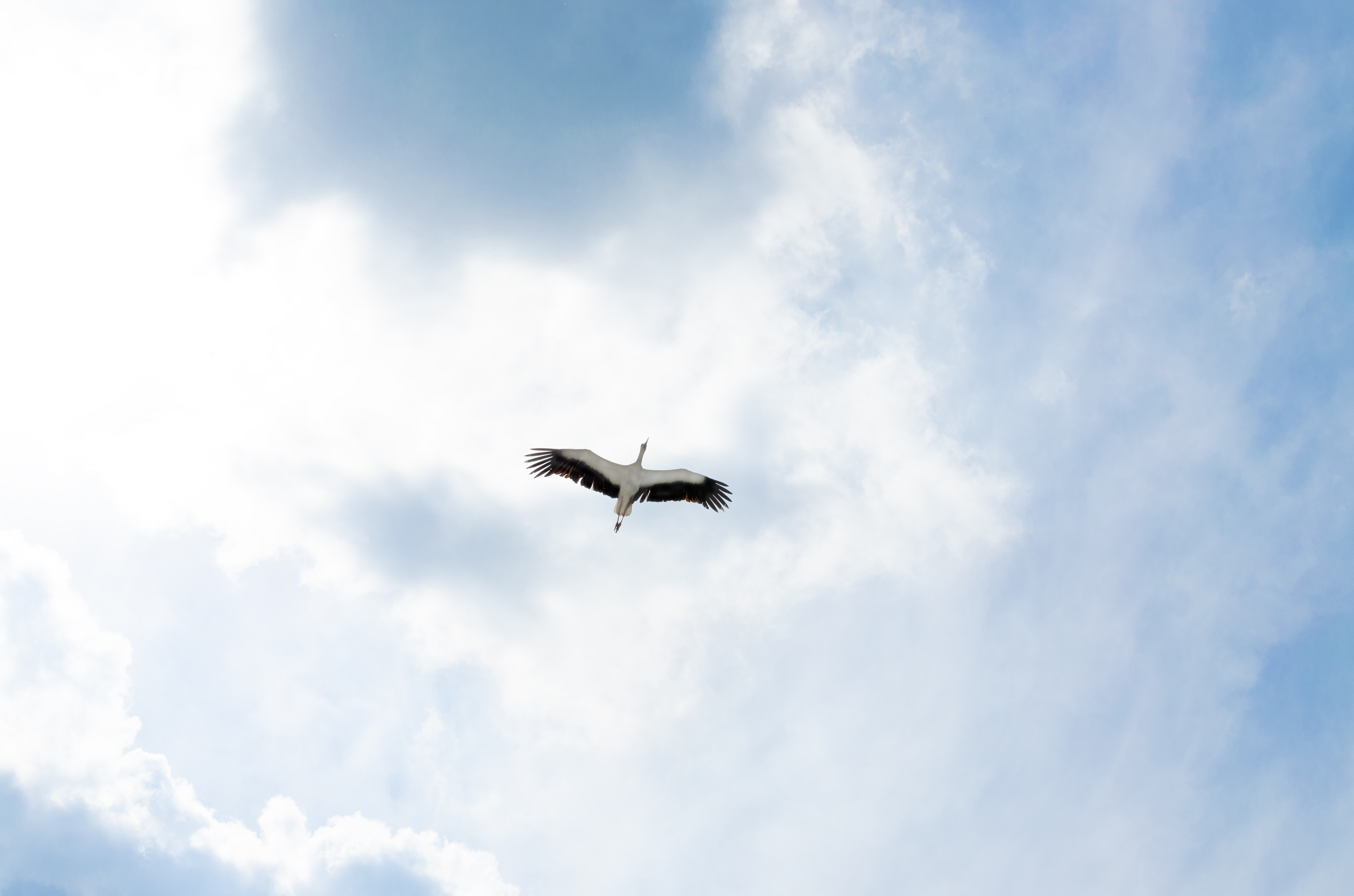 Image of a bird flying with a blue sky behind it.