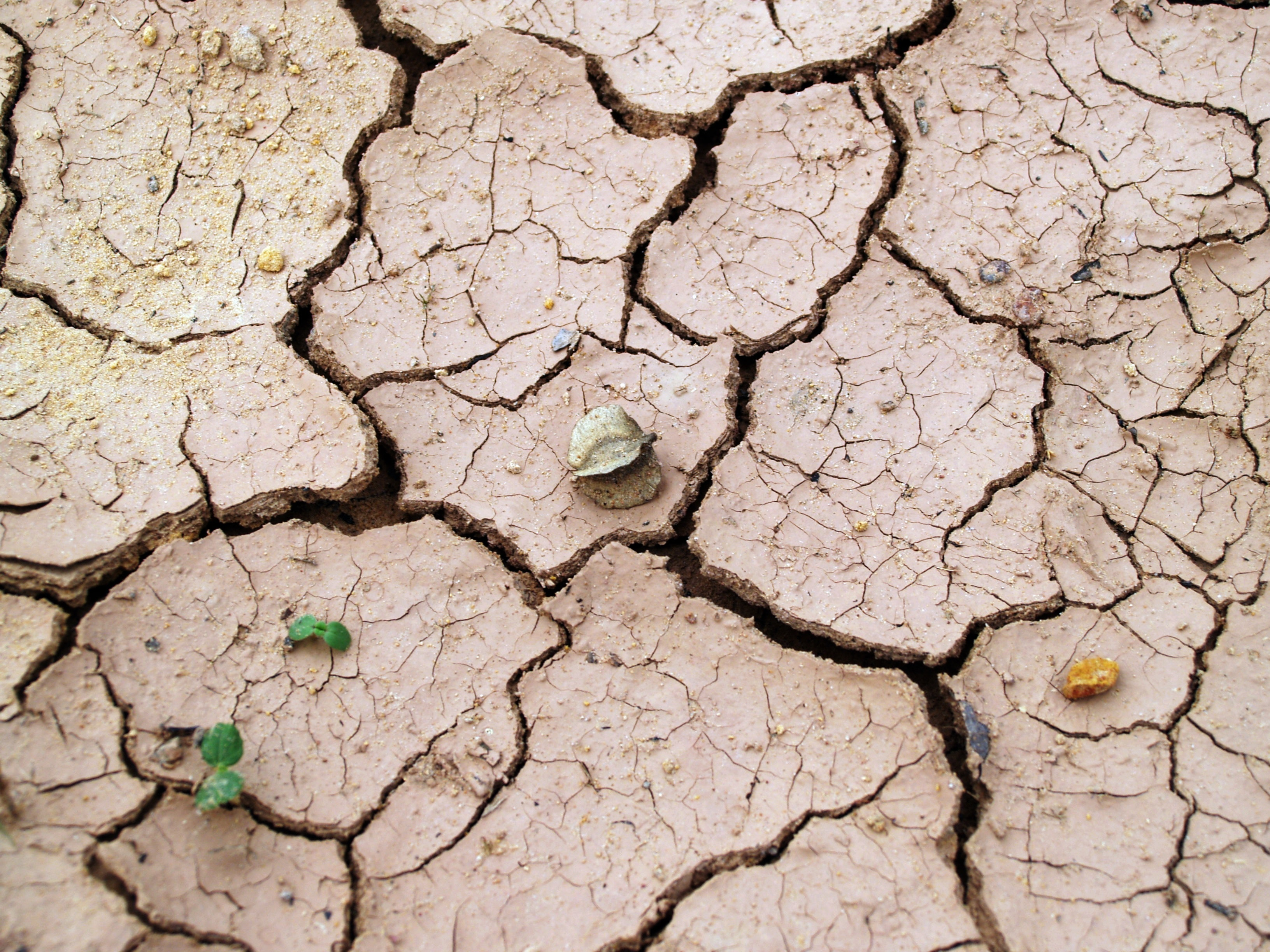 Image of cracks in the clay ground of a desert