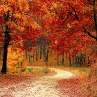 An image of a rural path in the fall, with red, orange, and yellow leaves scattered on the ground and in the trees.