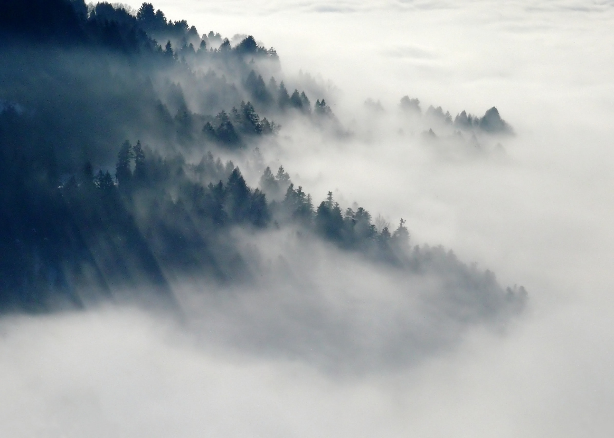 Photo of fog through the top of a forest.