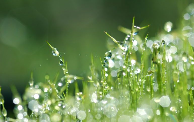 dewy plants close up
