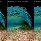Cover image of Stacey Lynn Brown's The Shallows