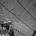 Black and white photograph of barbed wire on top of a metal fence